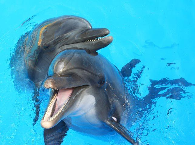 Colonies de vacances exceptionnelles auprès des dauphins