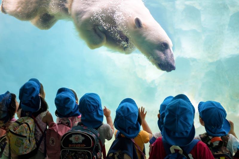 Voir les ours polaires au zoo La Fleche